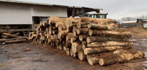 Timber Buyer