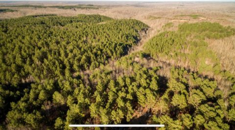 Land for Sale in West Tennessee